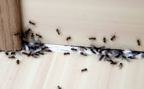 What Is Pest Control?